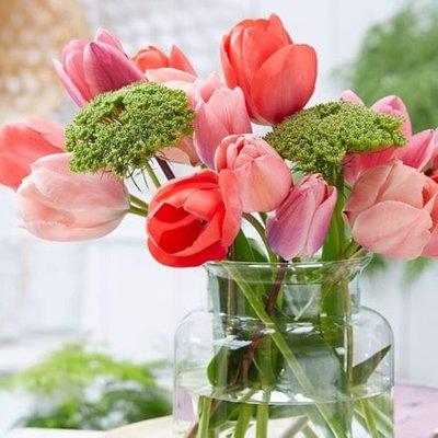 Orange sorbet tulip collection