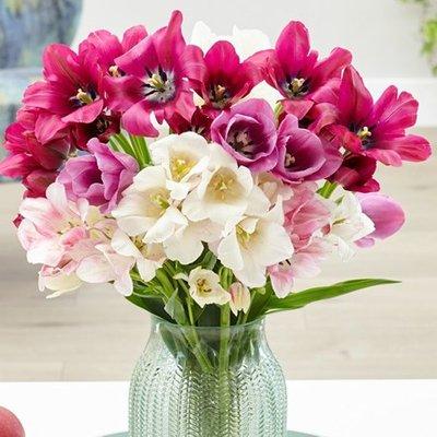 Club synaeda tulip collection