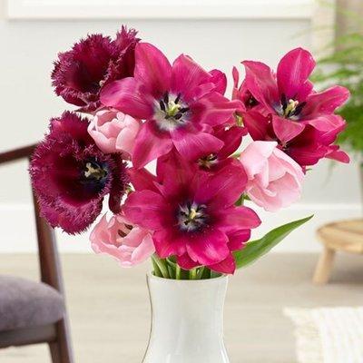 Dark eyes tulip collection