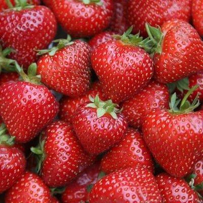 strawberry Sonata (PBR)