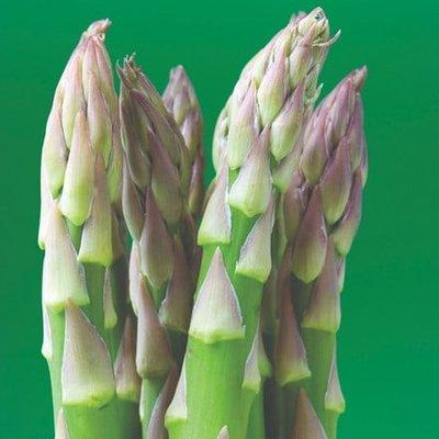 asparagus Backlim