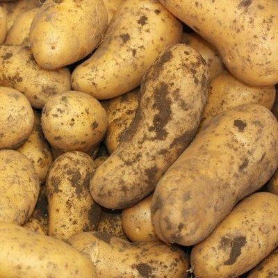potato Belle De Fontenay