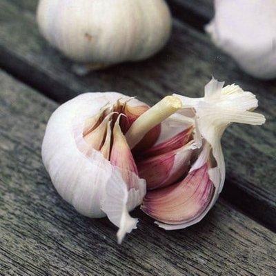 garlic Flavor