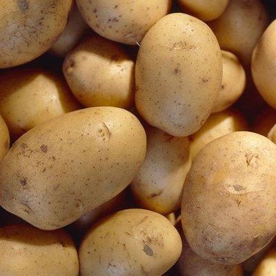 potato Carlingford (PBR)
