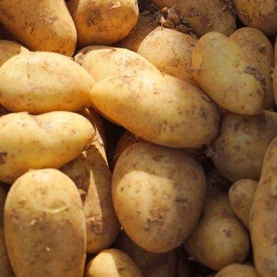 potato Estima