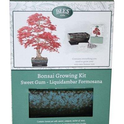 Bonsai sweet gum - seed growing kit