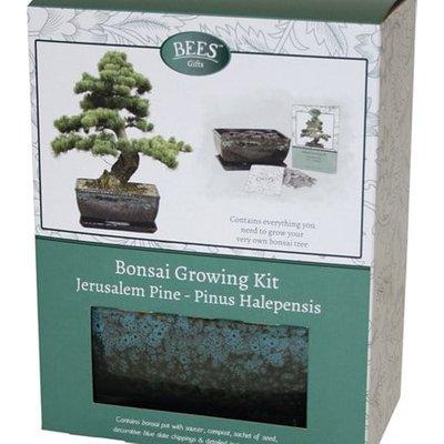 Bonsai pine - seed growing kit