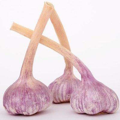 garlic Edenrose