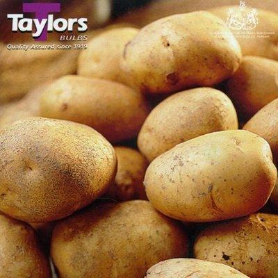 potato Saxon