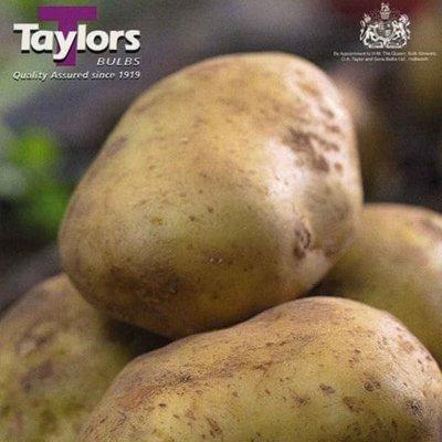 potato Orla