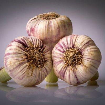 garlic Germidour