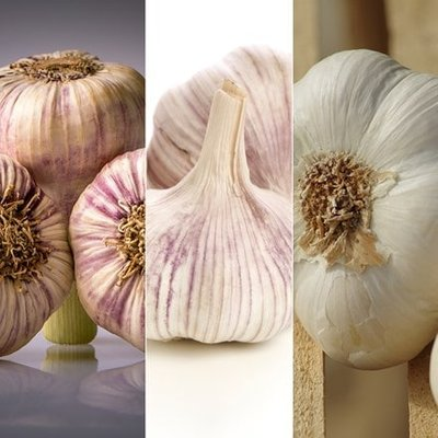 French garlic collection for autumn planting
