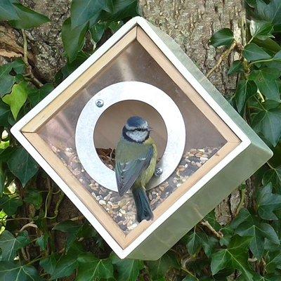 Urban bird feeder box