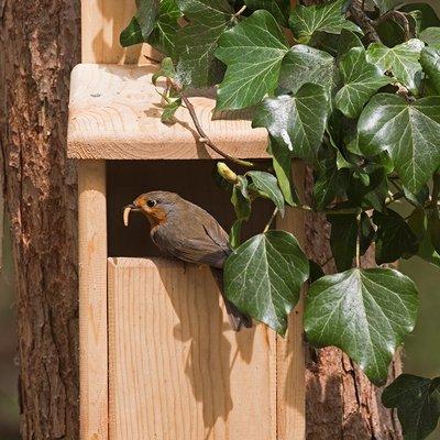 Cedar open front bird house