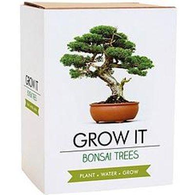 Gift Republic Bonsai Tree Plant Grow It