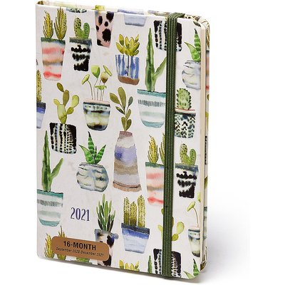16Month Succulents Diary