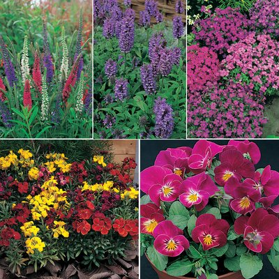 Short Perennial Mix