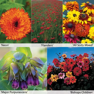 Annual Flower Border Seed Collection (Medium)