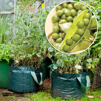 Handy Pea Planting Bag