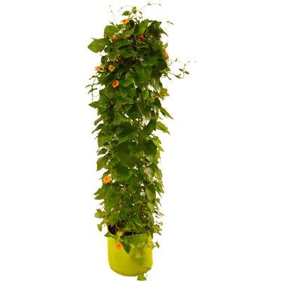 VegTrug by Vegtrug Ltd Patio Planter