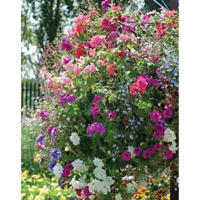 Hanging Basket Plant Collection