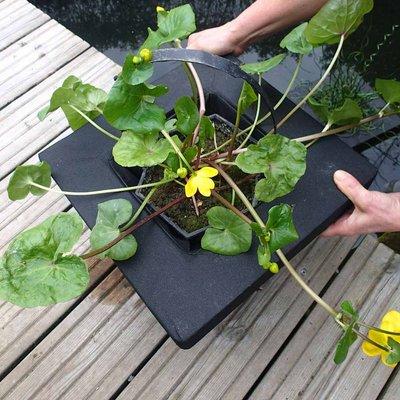 Floating Aquatic Planting Basket 35cm