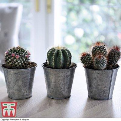 Cactus Mix (House Plant)