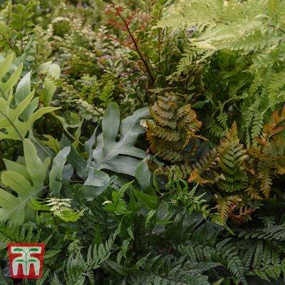 Fern Houseplant Mix