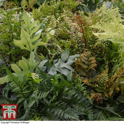 Fern Houseplant Mix