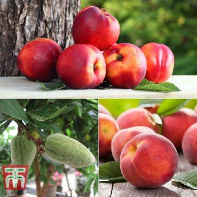 Fruit Me Collection (Mini Patio Tree)