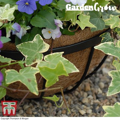 Garden Grow Hanging Basket Coco liner 30cm
