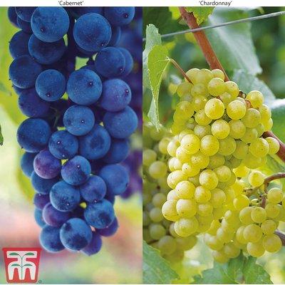 Grape Duo