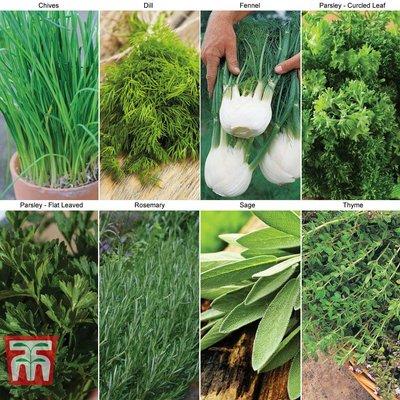 Kitchen Garden Herb Collection
