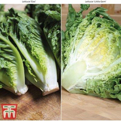 Lettuce Duo (Cos)