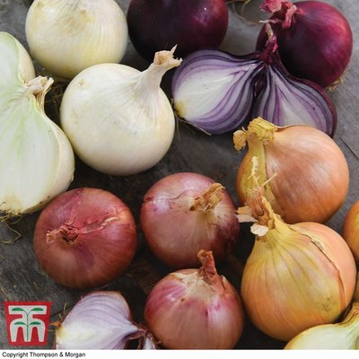 Onion Four Colour Bulb Mix