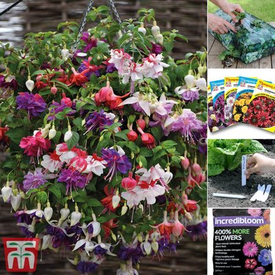 Fuchsia Plant and Seed Saver Pack