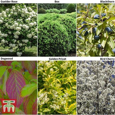 Hedging Saver Collection