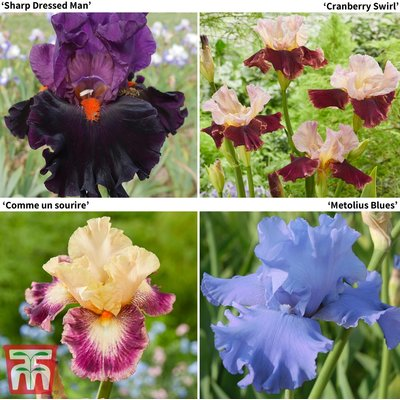 Iris Premium Collection