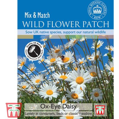 Ox-Eye Daisy - Kew Collection Seeds