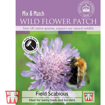 Field Scabious - Kew Collection Seeds