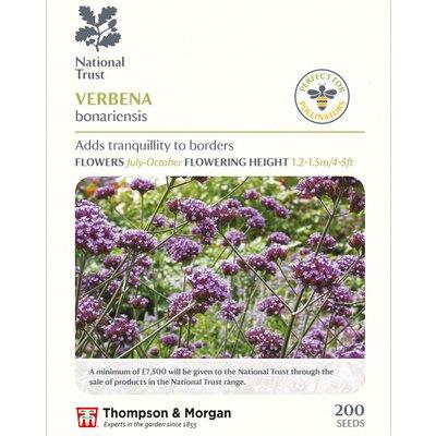 Verbena bonariensis (National Trust)