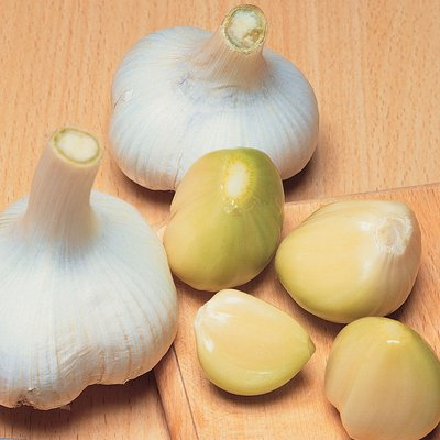 Elephant Garlic (Autumn or Spring Planting)