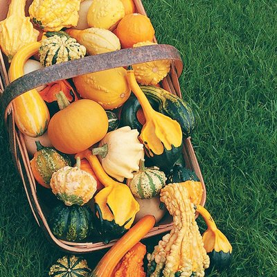 Ornamental Gourds Mix (Seeds)