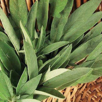 Sage (Seeds)