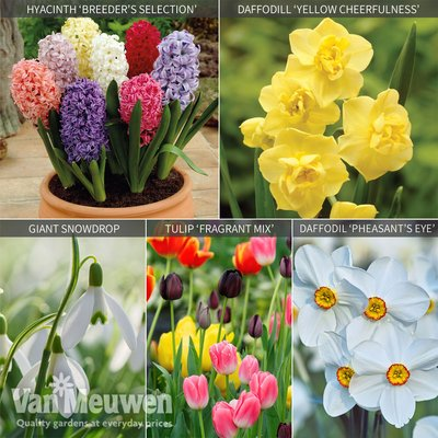 Fragrant Bulb Collection