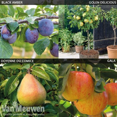 Patio Fruit Tree Collection