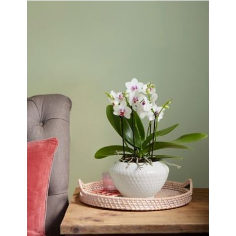 M&S Miniature Orchid Planter