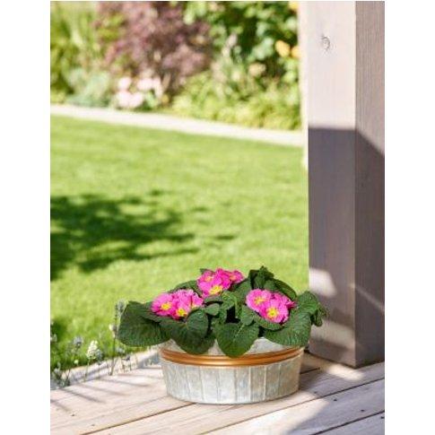 M&S Spring Garden Planter