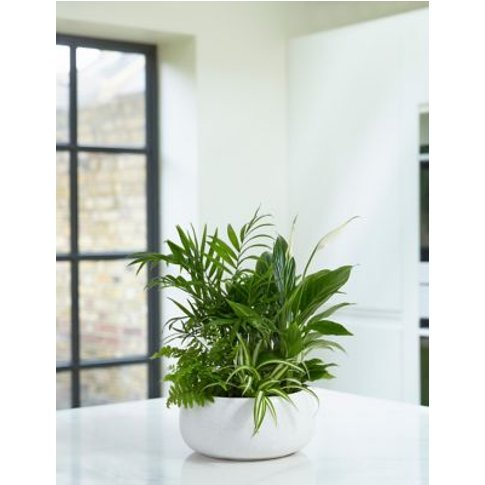 M&S Foliage Planter