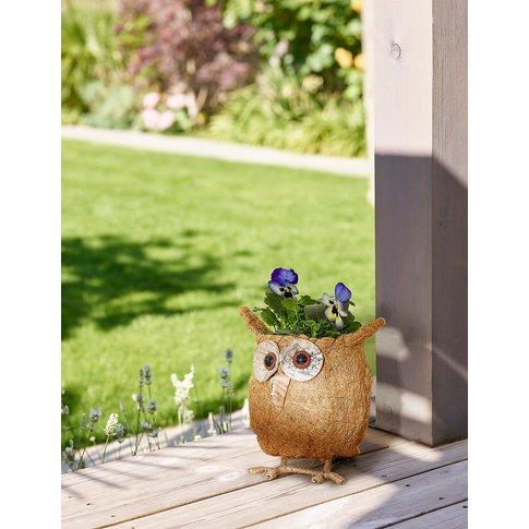 Novelty Scottie Dog Cyclamen Planter